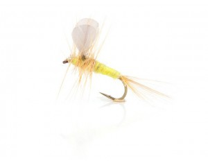 Musca Yellow Burn Wing Dun A.Jensen# 14